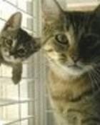 2 cute kitties