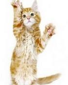 240x320-kitten-free-mobile-wallpaper.jpg