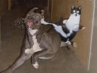 Free cat vs. dog.jpg phone wallpaper by terrortainment