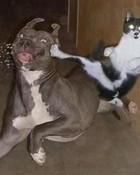 cat vs. dog.jpg wallpaper 1