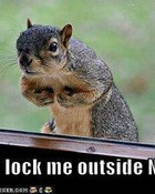funny-pictures-squirrel-locked-o-1.jpg wallpaper 1