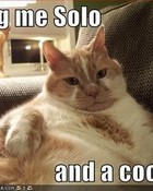 funny-pictures-orange-jabba-cat.jpg wallpaper 1