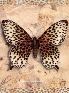 Free Cheetah Butterfly phone wallpaper by krazieliz