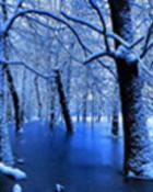 winterlaketrees.jpg