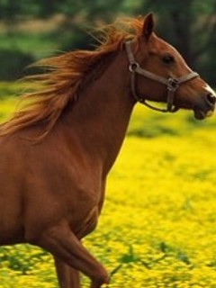 Free horses.jpg phone wallpaper by armyofone