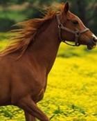horses.jpg wallpaper 1