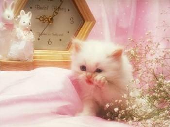 Free Pretty kitty phone wallpaper by kaneadsha