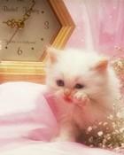 Pretty kitty wallpaper 1