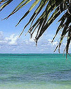 View from Conch Shack.jpg