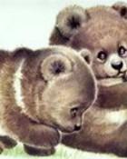 The Grizzly Bear.jpg