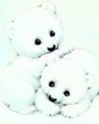 The Polar Bear.jpg