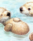 The Southern Sea Otter.jpg wallpaper 1