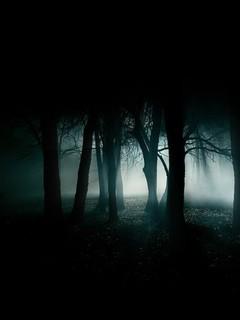 Free dark-woods-forest phone wallpaper by monkey62680