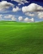 Windows Scene