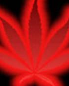 Red GlowiN Bud Leaf wallpaper 1