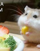 funny cute hamster