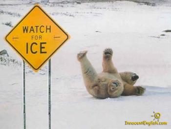 Free funny polar bear phone wallpaper by ilovemydog