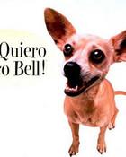 funny taco dog