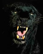 PantherClose.jpg