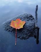 The Leaf.jpg wallpaper 1