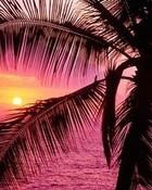 pink_sunset-4593.jpg