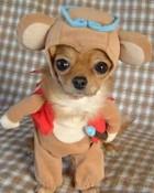 funny-dog-costume.jpg