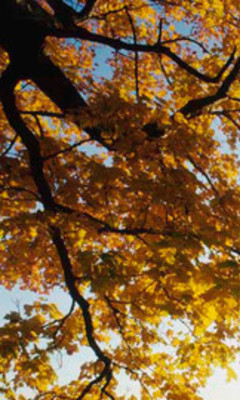 Free Autumn Leaves.jpg phone wallpaper by stets69