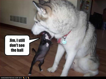 Free funny-dog-pictures-see-ball.jpg phone wallpaper by barbiegurl22