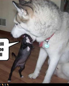 funny-dog-pictures-see-ball.jpg