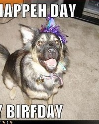 funny-dog-pictures-happy-day.jpg