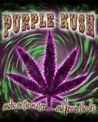 Purple Kush 3.jpg