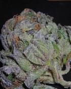 Purple Kush 5.jpg