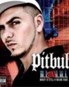 Pitbull 5.jpeg