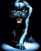 8_Panther-85694.jpg