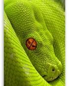 exotic_snake_2-t2.jpg