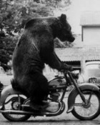 motorcycle bear.jpg