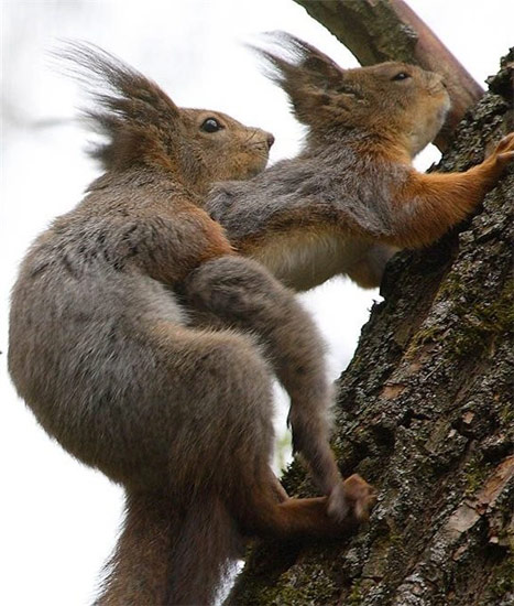 Free squirrels_going_at_it[1].jpg phone wallpaper by delvania