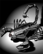 Scorpion Robot
