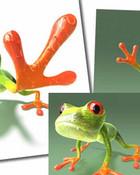 peace_frogs_.jpg