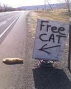 Free-Cat.jpg