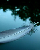 Feather_bird_desktop_photo_backgrounds.jpg