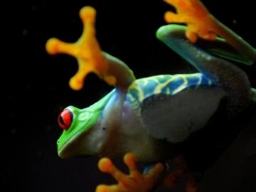 Free frog.JPG phone wallpaper by greeneyedgurl