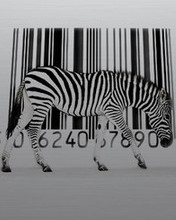 Free Zebra_Code.jpg phone wallpaper by pinkrose2