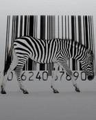 Zebra_Code.jpg wallpaper 1