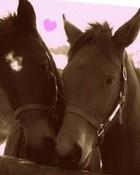 horse love wallpaper 1
