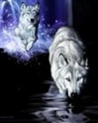 wolves in water