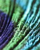 Peacock feather.jpg