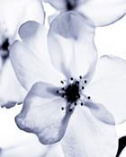 white nature.jpg