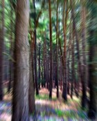 Forest of trip