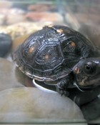 pictures-of-turtles-15.jpg